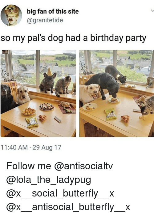 Birthday, Memes, and Party: big fan of this site  @granitetide  so my pal's dog had a birthday party  11:40 AM 29 Aug 17 Follow me @antisocialtv @lola_the_ladypug @x__social_butterfly__x @x__antisocial_butterfly__x