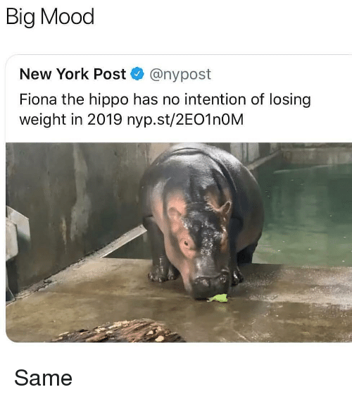 Losing Weight: Big Mood  New York Post @nypost  Fiona the hippo has no intention of losing  weight in 2019 nyp.st/2EO1nOM Same