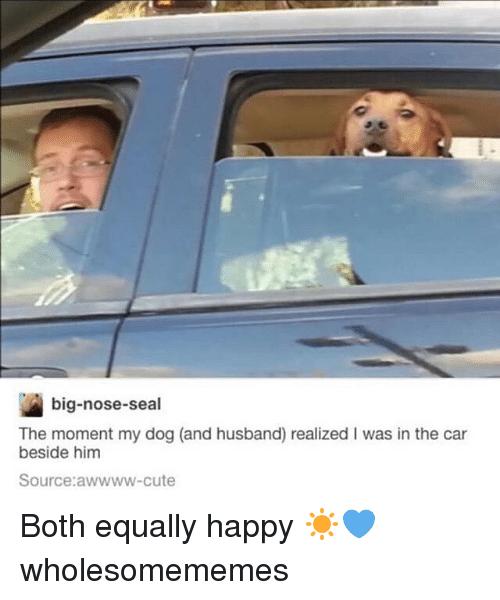 Big Nose: big-nose-seal  The moment my dog (and husband) realized I was in the car  beside him  Source:awwww-cute Both equally happy ☀️💙 wholesomememes