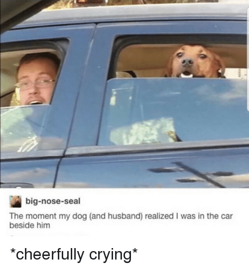 Crying, Seal, and Husband: big-nose-seal  The moment my dog (and husband) realized I was in the car  beside him *cheerfully crying*