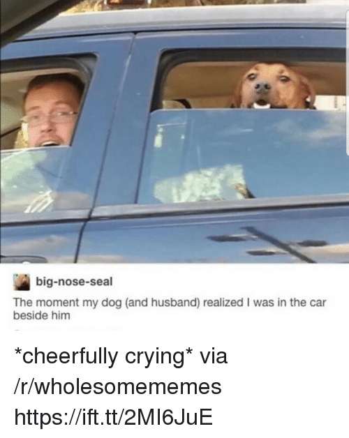 Big Nose: big-nose-seal  The moment my dog (and husband) realized I was in the car  beside him *cheerfully crying* via /r/wholesomememes https://ift.tt/2MI6JuE