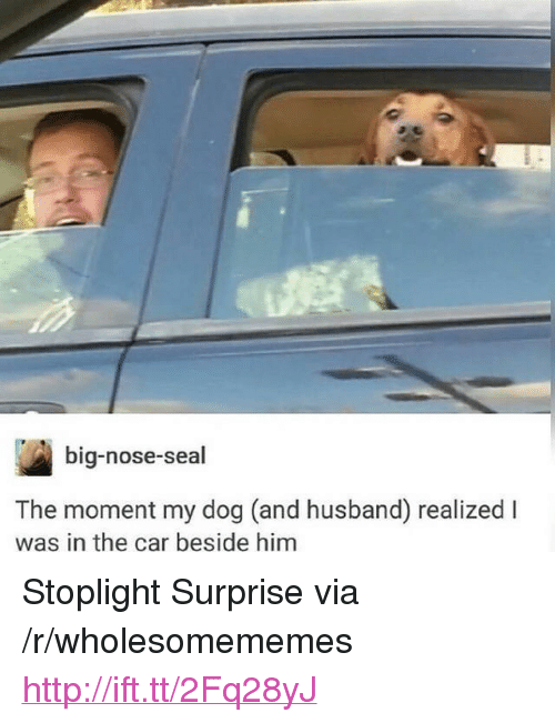 """Big Nose: big-nose-seal  The moment my dog (and husband) realized l  was in the car beside him <p>Stoplight Surprise via /r/wholesomememes <a href=""""http://ift.tt/2Fq28yJ"""">http://ift.tt/2Fq28yJ</a></p>"""