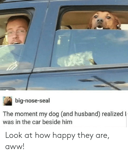 Big Nose: big-nose-seal  The moment my dog (and husband) realizedl  was in the car beside him Look at how happy they are, aww!