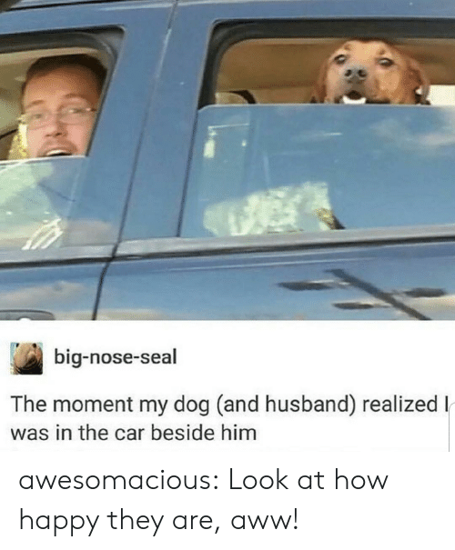 Big Nose: big-nose-seal  The moment my dog (and husband) realizedl  was in the car beside him awesomacious:  Look at how happy they are, aww!