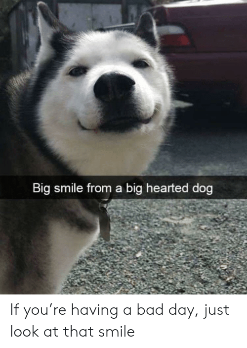 Just Look At That: Big smile from a big hearted dog If you're having a bad day, just look at that smile
