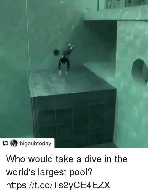 Funny, Pool, and Who: (?) bigbubtoday Who would take a dive in the world's largest pool? https://t.co/Ts2yCE4EZX