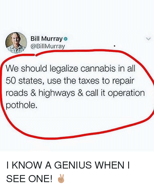 50 states: Bill Murray  BillMurray  We should legalize cannabis in all  50 states, use the taxes to repair  roads & highways & call it operation  pothole. I KNOW A GENIUS WHEN I SEE ONE! ✌🏽