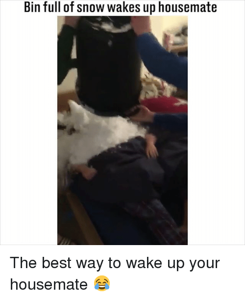 Memes, Best, and Snow: Bin full of snow wakes up housemate The best way to wake up your housemate 😂