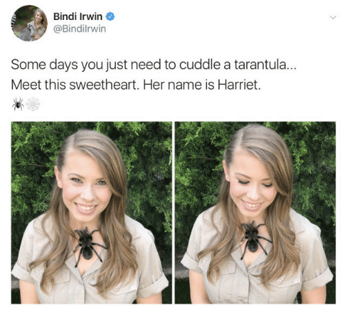 I Just Want To Cuddle With You: Bindi Irwin Some Days You Just Need To Cuddle A Tarantul