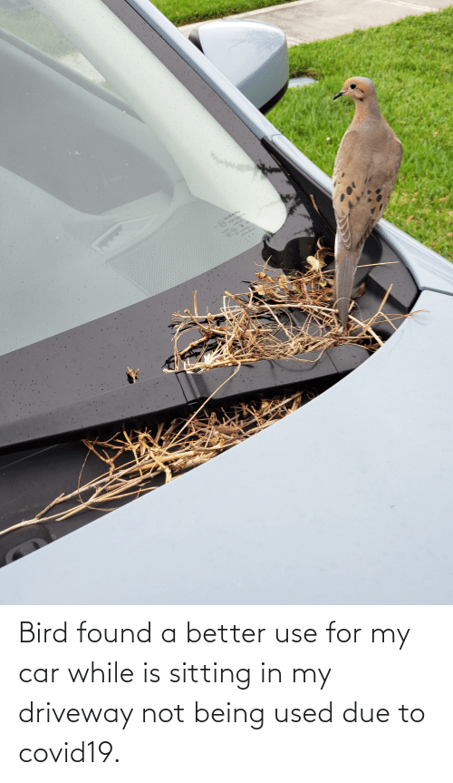 Not Being: Bird found a better use for my car while is sitting in my driveway not being used due to covid19.