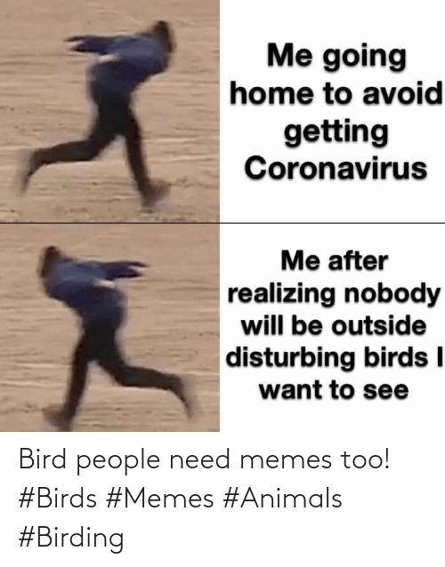bird: Bird people need memes too! #Birds #Memes #Animals #Birding