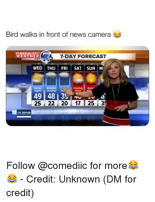 Memes, News, and Camera: Bird walks in front of news camera  WEATHER  7-DAY FORECAST  ENVER  WED THU FRI SAT SUN M  Clearing Sun  SkiesW  rs  Again Develop in  25 22 20 17 25 3  THE.PCYER Follow @comediic for more😂😂 - Credit: Unknown (DM for credit)
