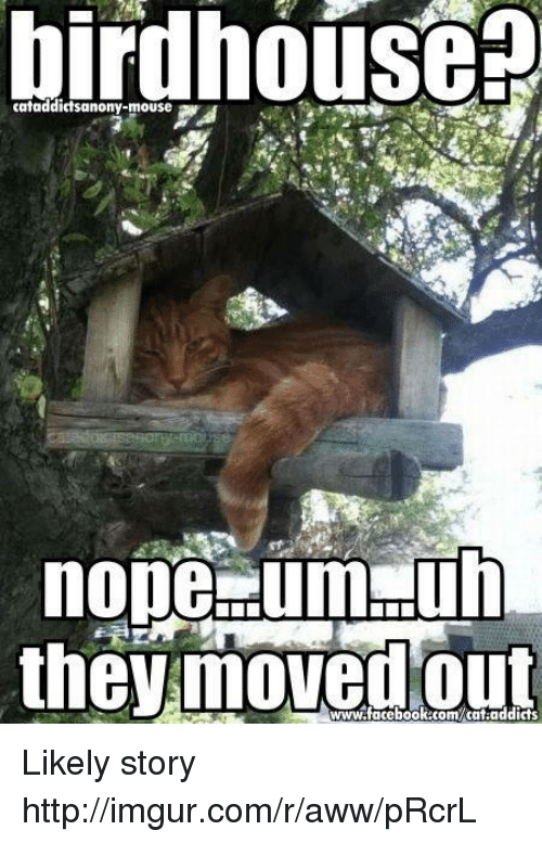 imgure: birdhouse  nope dumpuh  the moved www.facebook.com/cat addicts Likely story  http://imgur.com/r/aww/pRcrL
