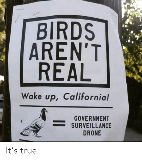 Drone: BIRDS  AREN'T  REAL  Wake up, California!  GOVERNMENT  SURVEILLANCE  DRONE It's true