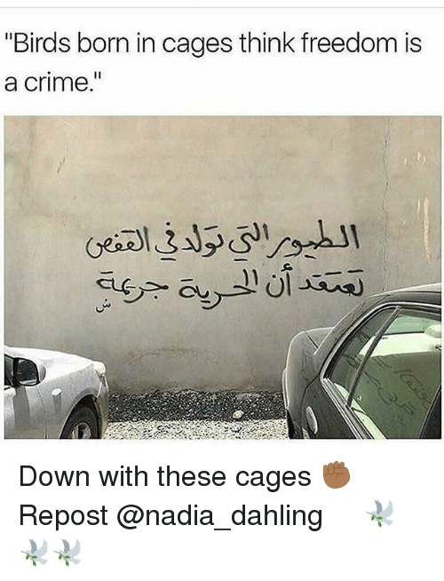 """Crime, Memes, and Birds: """"Birds born in cages think freedom is  a crime  I1 Down with these cages ✊🏾 Repost @nadia_dahling ・・・ 🕊🕊🕊"""