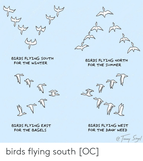 dank weed: BIRDS FLYING SOUTH  BIRDS FLYING NORTH  FOR THE WINTER  FOR THE SUMMER  BIRDS FLYING EAST  FOR THE BAGELS  BIRDS FLYING WEST  FOR THE DANK WEED birds flying south [OC]