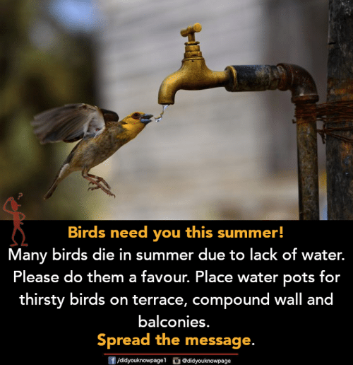 pots: Birds need you this summer!  Many birds die in summer due to lack of water.  Please do them a favour. Place water pots for  thirsty birds on terrace, compound wall and  balconies.  Spread the message.  ge