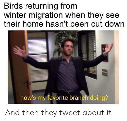 branch: Birds returning from  winter migration when they see  their home hasn't been cut down  how's my favorite branch doing? And then they tweet about it