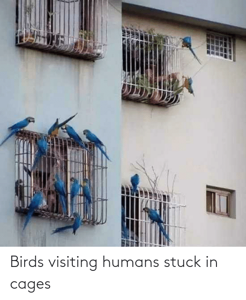 stuck: Birds visiting humans stuck in cages