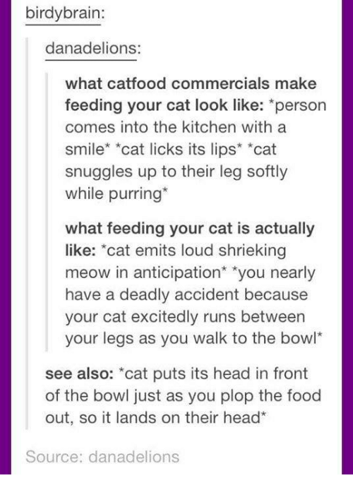 """licks: birdybrain:  danadelions:  what catfood commercials make  feeding your cat look like: *person  comes into the kitchen with a  smile* *cat licks its lips* *cat  snuggles up to their leg softly  while purring*  what feeding your cat is actually  like: """"cat emits loud shrieking  meow in anticipation* """"you nearly  have a deadly accident because  your cat excitedly runs between  your legs as you walk to the bowl  see also: *cat puts its head in front  of the bowl just as you plop the food  out, so it lands on their head  Source: danadelions"""