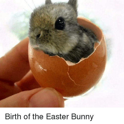 Easter, Bunny, and Easter Bunny: Birth of the Easter Bunny