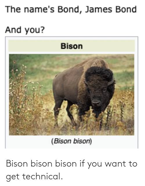 bison: Bison bison bison if you want to get technical.