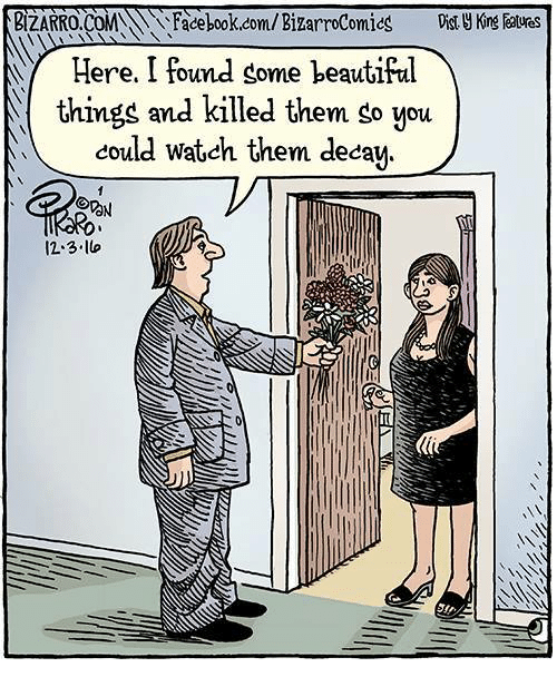 deca: BIZARRO  Facebook.com/Bizarrocomics  ere. I found gome beautiful  things and killed them go you  could watch them deca  ON  12.3 lo