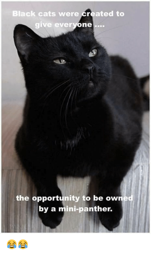 Cats, Grumpy Cat, and Black: Black cats were created to  give everyone  the opportunity to be owned  by a mini-panther. 😂😂