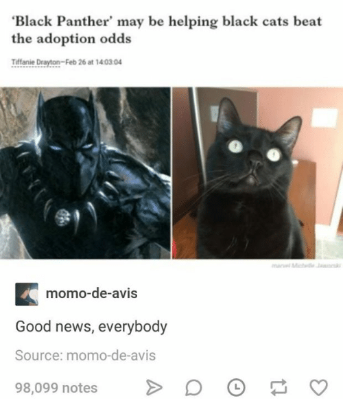 Cats, News, and Black: Black Panther' may be helping black cats beat  the adoption odds  Tiffanie Drayton-Feb 26 at 1403.04  momO-de-avis  Good news, everybody  Source: momo-de-avis  98,099 notesD O