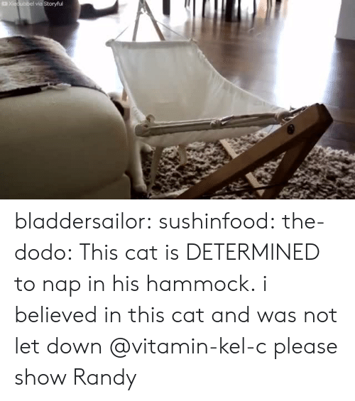 Hammock: bladdersailor: sushinfood:  the-dodo:  This cat is DETERMINED to nap in his hammock.  i believed in this cat and was not let down   @vitamin-kel-c please show Randy