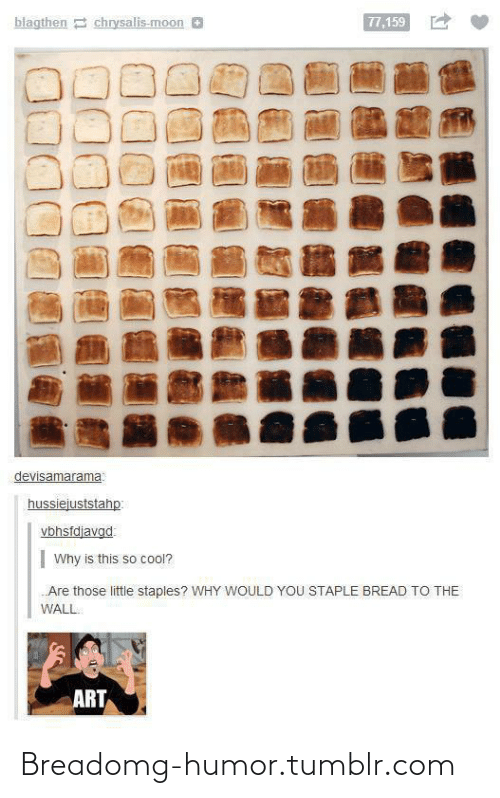 Wall Art: blagthen 2 chrysalis-moon O  77,159  devisamarama  hussiejuststahp:  vbhsfdjavgd  Why is this so cool?  Are those little staples? WHY WOULD YOU STAPLE BREAD TO THE  WALL  ART Breadomg-humor.tumblr.com