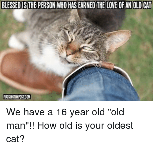 cutest kinds of cats