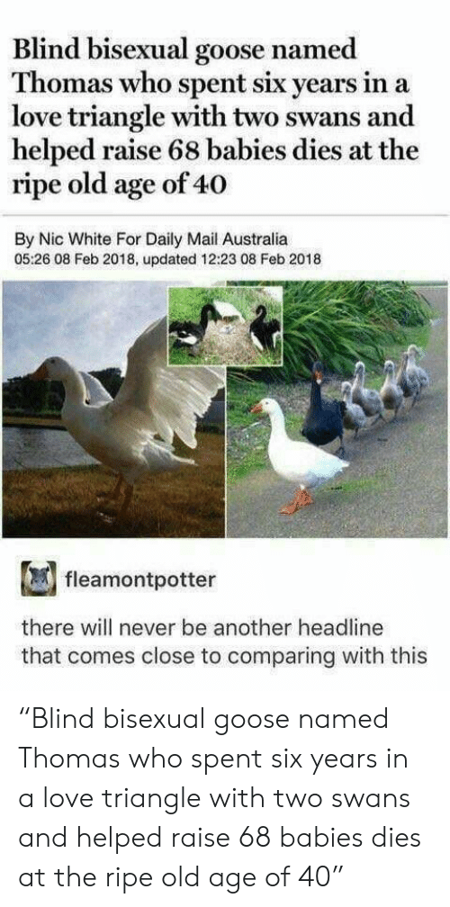 """swans: Blind bisexual goose named  Thomas  who spent six ye  ars in a  love triangle with two swans and  helped raise 68 babies dies at the  ripe old age of 40  By Nic White For Daily Mail Australia  05:26 08 Feb 2018, updated 12:23 08 Feb 2018  fleamontpotter  there will never be another headline  that comes close to comparing with this """"Blind bisexual goose named Thomas who spent six years in a love triangle with two swans and helped raise 68 babies dies at the ripe old age of 40"""""""