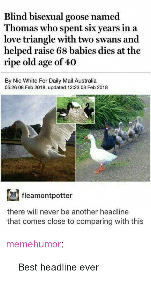 """Love, Tumblr, and Australia: Blind bisexual goose named  Thomas who spent six years in a  love triangle with two swans and  helped raise 68 babies dies at the  ripe old age of 40  By Nic White For Daily Mail Australia  05:26 08 Feb 2018, updated 12:23 08 Feb 2018  fleamontpotter  there will never be another headline  that comes close to comparing with this <p><a href=""""http://memehumor.net/post/173814318677/best-headline-ever"""" class=""""tumblr_blog"""">memehumor</a>:</p>  <blockquote><p>Best headline ever</p></blockquote>"""