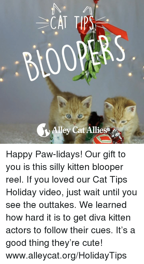 blooper: BLOOPERS  ey Cat Alliesar. Happy Paw-lidays! Our gift to you is this silly kitten blooper reel. If you loved our Cat Tips Holiday video, just wait until you see the outtakes. We learned how hard it is to get diva kitten actors to follow their cues. It's a good thing they're cute!    www.alleycat.org/HolidayTips