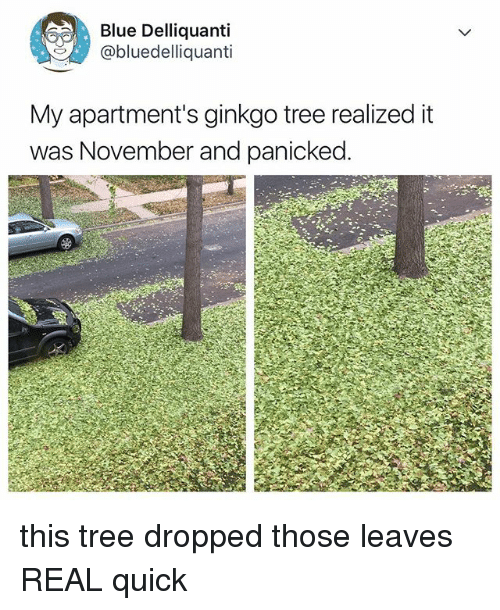 Blue, Tree, and Relatable: Blue Delliquanti  @bluedelliquanti  My apartment's ginkgo tree realized it  was November and panicked this tree dropped those leaves REAL quick