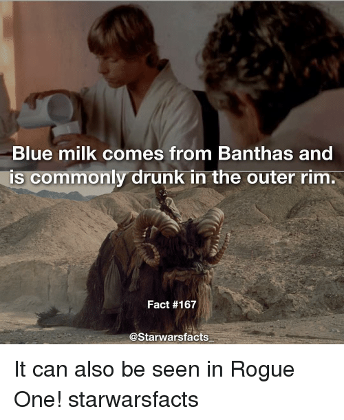 starwar: Blue milk comes from Banthas and  TS commonly drunk in the outer rim.  Fact #167  @Starwars facts It can also be seen in Rogue One! starwarsfacts