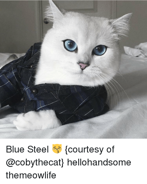 blue steel: Blue Steel 😽 {courtesy of @cobythecat} hellohandsome themeowlife