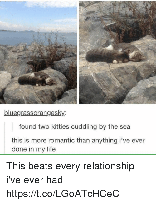 Kitties, Life, and Beats: bluegrassorangesky  found two kitties cuddling by the sea  this is more romantic than anything i've ever  done in my life This beats every relationship i've ever had https://t.co/LGoATcHCeC