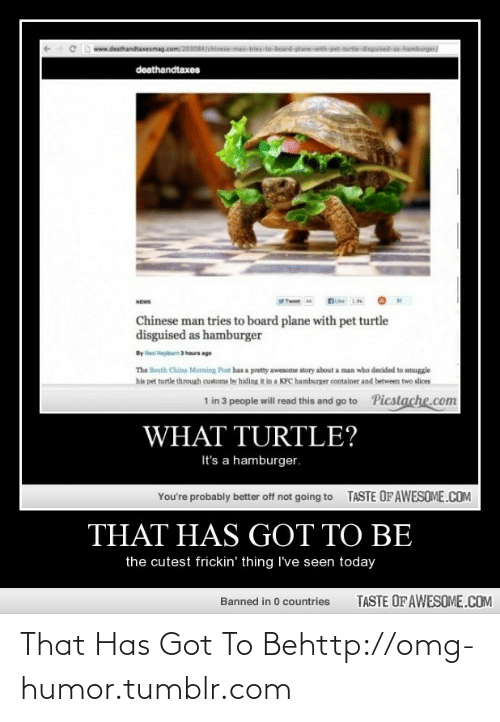 Man Tries: board-plane-with pet-turtedisgulsed-as-hamburger  www.deathandtaxesmag.com/2030847  deathandtaxes  19  NEWS  Chinese man tries to board plane with pet turtle  disguised as hamburger  By Ned Hepburn 3 hours ago  The South China Moming Post has a pretty awesome story about a man who decided to smuggle  his pet turtle through customs by hiding it in a KFC hamburger container and between two slices  Picstache.com  1 in 3 people will read this and go to  WHAT TURTLE?  It's a hamburger.  TASTE OFAWESOME.COM  You're probably better off not going to  THAT HAS GOT TO BE  the cutest frickin' thing I've seen today  TASTE OF AWESOME.COM  Banned in 0 countries That Has Got To Behttp://omg-humor.tumblr.com