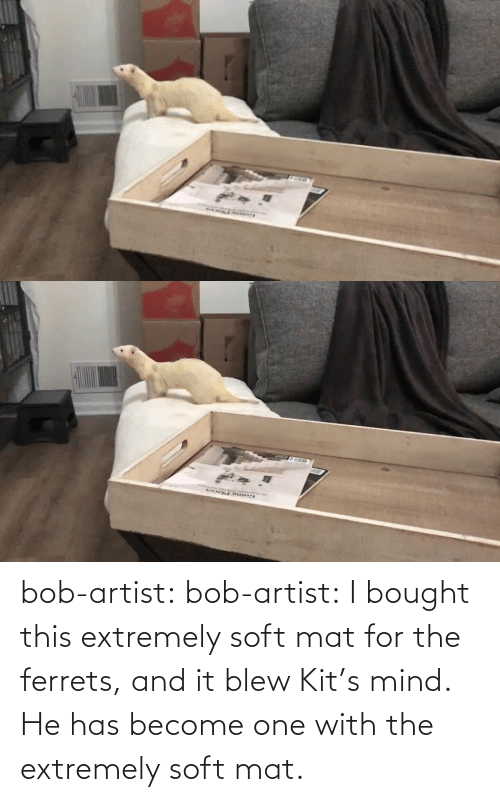 He Has: bob-artist: bob-artist: I bought this extremely soft mat for the ferrets, and it blew Kit's mind. He has become one with the extremely soft mat.
