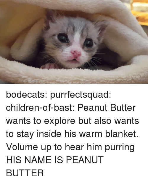 Volume Up: bodecats:  purrfectsquad:  children-of-bast: Peanut Butter wants to explore but also wants to stay inside his warm blanket. Volume up to hear him purring  HIS NAME IS PEANUT BUTTER