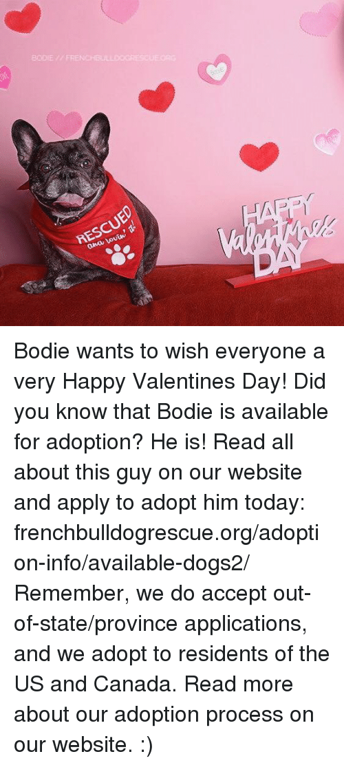 us-and-canada: BODIE // FRENCHBU  RESCUED  ana Lovin, Bodie wants to wish everyone a very Happy Valentines Day!  Did you know that Bodie is available for adoption? He is! Read all about this guy on our website and apply to adopt him today: frenchbulldogrescue.org/adoption-info/available-dogs2/  Remember, we do accept out-of-state/province applications, and we adopt to residents of the US and Canada. Read more about our adoption process on our website. :)