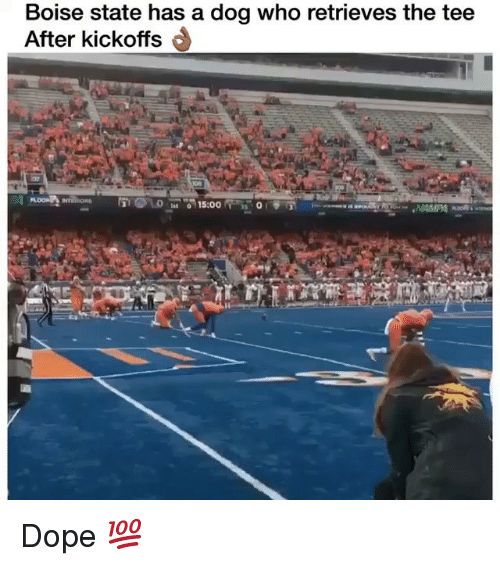 Dope, Memes, and 🤖: Boise state has a dog who retrieves the tee  After kickoffs Dope 💯