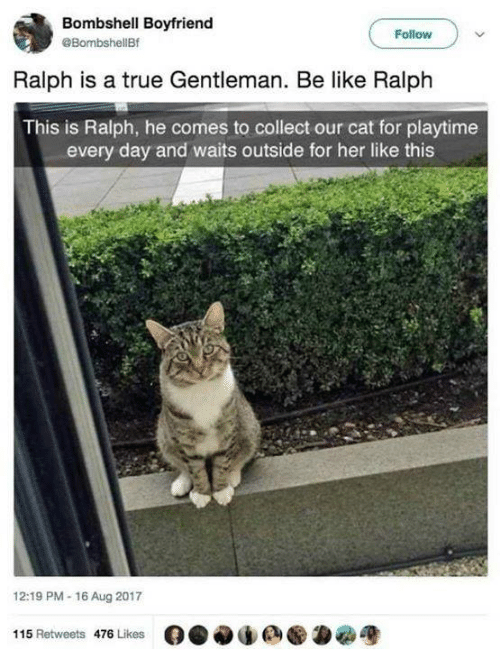 True Gentleman: Bombshell Boyfriend  @BombshellBf  Follow  Ralph is a true Gentleman. Be like Ralph  This is Ralph, he comes to collect our cat for playtime  every day and waits outside for her like this  12:19 PM-16 Aug 2017  115 Retweets 476 Likes  O.闷de ●為宽