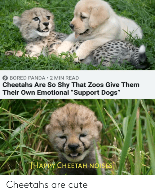 """zoos: BORED PANDA 2 MIN READ  Cheetahs Are So Shy That Zoos Give Them  Their Own Emotional """"Support Dogs""""  THAPPY CHEETAH NOISES] Cheetahs are cute"""