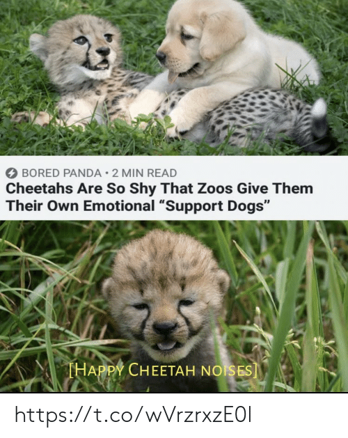 """zoos: BORED PANDA 2 MIN READ  Cheetahs Are So Shy That Zoos Give Them  Their Own Emotional """"Support Dogs""""  THAPPY CHEETAH NOISES] https://t.co/wVrzrxzE0l"""