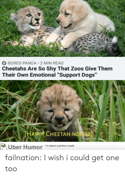 """zoos: BORED PANDA 2 MIN READ  Cheetahs Are So Shy That Zoos Give Them  Their Own Emotional """"Support Dogs""""  THAPPY CHEETAH NOISES  Uber Humor  I'm afraid I just blue myself. failnation:  I wish i could get one too"""