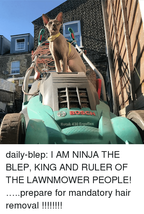 Lawnmower: BOSCA  Rotak 430 Ergoflex daily-blep:  I AM NINJA THE BLEP, KING AND RULER OF THE LAWNMOWER PEOPLE!…..prepare for mandatory hair removal !!!!!!!!