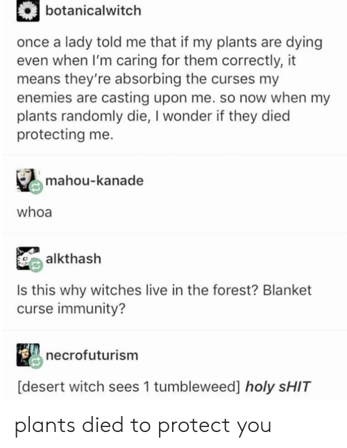 curses: botanicalwitch  once a lady told me that if my plants are dying  even when I'm caring for them correctly, it  means they're absorbing the curses my  enemies are casting upon me. so now when my  plants randomly die, I wonder if they died  protecting me  mahou-kanade  whoa  alkthash  Is this why witches live in the forest? Blanket  curse immunity?  necrofuturism  [desert witch sees 1 tumbleweed] holy SHIT plants died to protect you